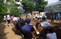 校内にある畑でサツマイモ栽培